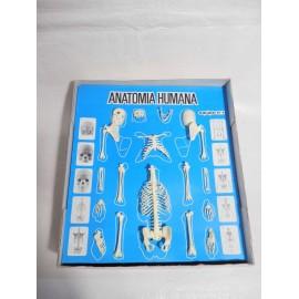 Juego de Anatomía Humana Serima. Equipo con instrucciones y peana. Años 70-80. Ref 3.